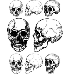 skull design vector image