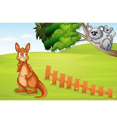 Kangaroo and koalas vector image