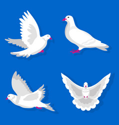 pigeons or white dove birds flying flat vector image