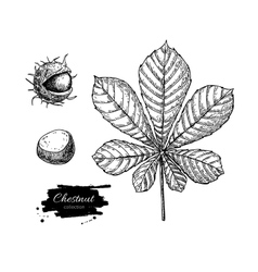 Chestnut leaf and nuts drawing set autumn vector