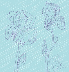 iris flowers tile vector image vector image