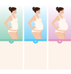 Three trimesters of pregnancy vector image