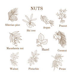 Collection of different nut branches vector