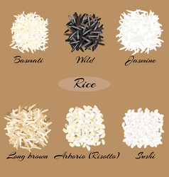 Different types of rice vector