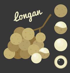 longan vector image vector image