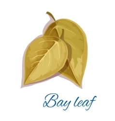 Bay leaf isloated icon with text vector