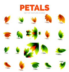 Flower petals and leaves vector