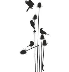 Birdie on a thistle vector