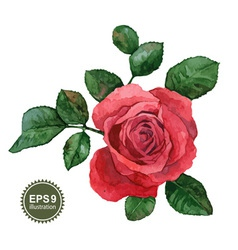 Single rose vector image