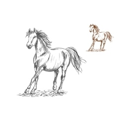 Horse galloping sketch portrait vector