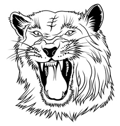 Big cat head vector