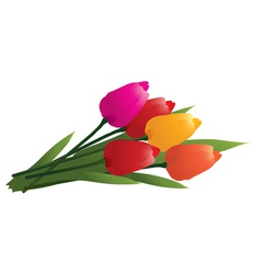 colorful tulips vector image