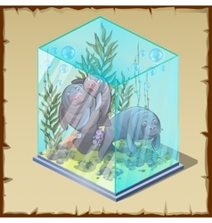 Family fur seals captivity frozen in a cube of ice vector image vector image