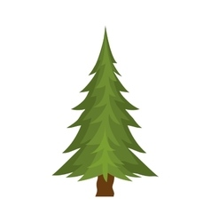grenn pine tree vector image