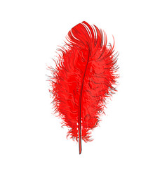 Hand drawn tender fluffy red bird feather sketch vector