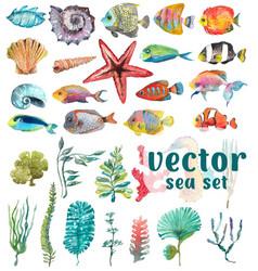 Watercolor sea life seaweed shell fish sea vector