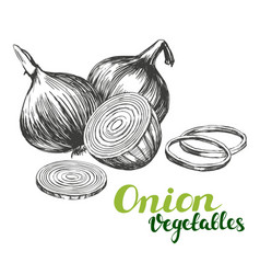 Onion vegetable set hand drawn vector