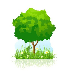 isolated green tree background vector image