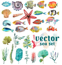 Watercolor sea life seaweed shell fish sea vector