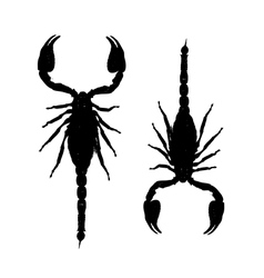 Scorpions black silhouette for your design vector image