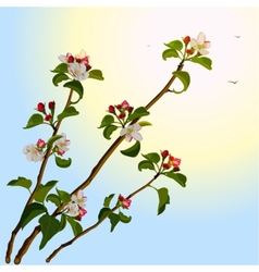 Branch apple tree with flowers vector image