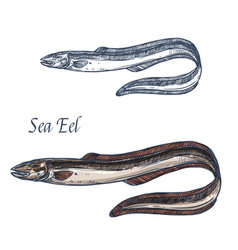 Sea eel fish isolated sketch icon vector