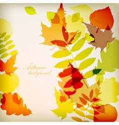 Bright colorful autumn leaves vector image