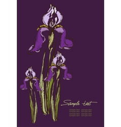 Hand drawing irises on a purple background vector