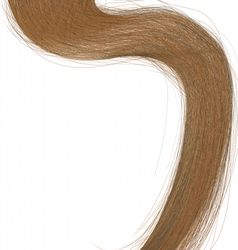long hair vector image