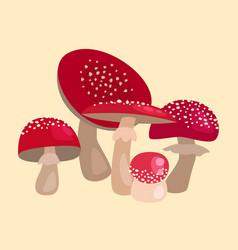 Amanita fly agaric toadstool mushrooms fungus vector