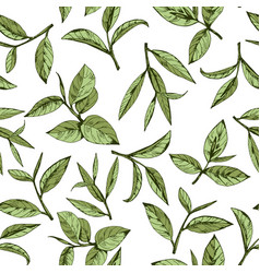seamless pattern with green tea vector image vector image