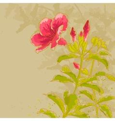 Allamanda flower on toned background vector image vector image
