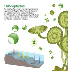 Underwater algae seaweed elements vector