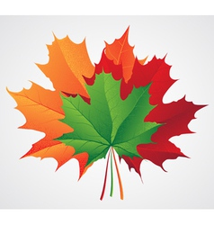 Autumn leaves seasonal background vector image