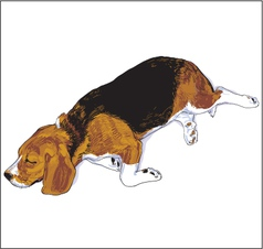 Beagle2 vector image vector image
