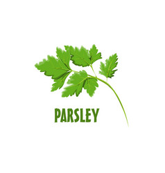 Logo parsley farm design vector
