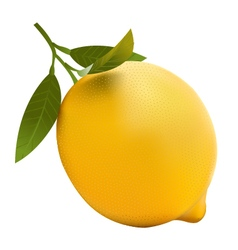 Lemon realistic vector