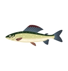 Grayling salmon thymallus fish vector image