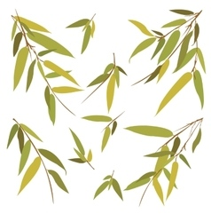 Bamboo branches isolated on white background vector image