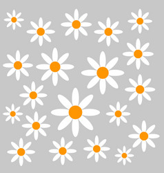 chamomiles on grey background vector image vector image