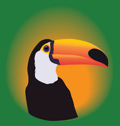 Head of a Toucan on a green background vector image
