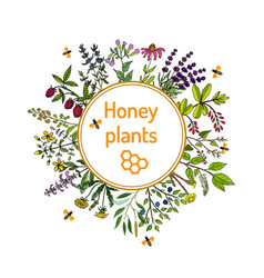 nectar sources for honey bees vector image