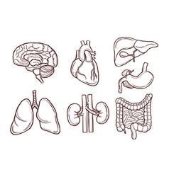 hand drawn of human organs medical vector image vector image
