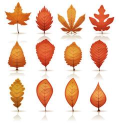 Autumn leaves set vector