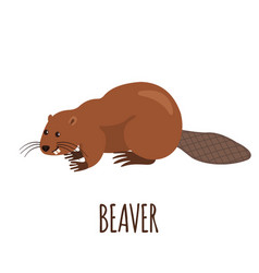 funny beaver in flat style vector image