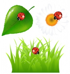 ladybugs at home vector image