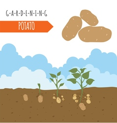 Gardening work farming potato graphic template vector