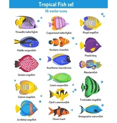 Tropical fish icons set vector