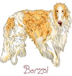 Borzoi dog breed vector