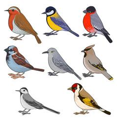 Set of birds vector